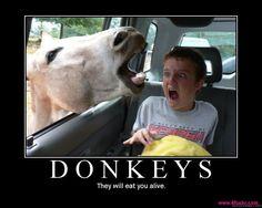 KILLER DONKEYS!!