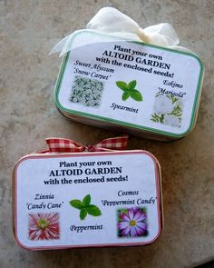Altoids Garden in a Tin for Christmas.  Super cute!