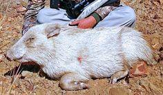 rare albino animals - Google Search