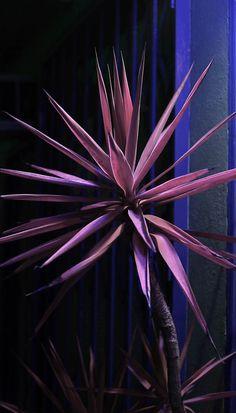 Still from Yucca Color Shift, 2011 | Owen Kydd