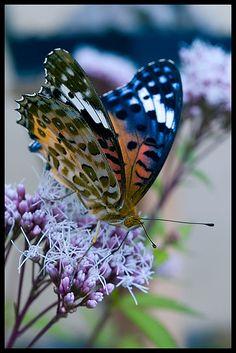 """~Choucho butterfly, Tokyo / """"Conhecimento sem transformação não é sabedoria."""" (Paulo Coelho)"""