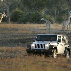 ahhh... jeeps are soo cute