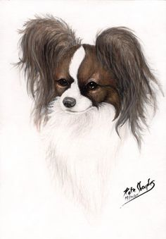 Google Image Result for http://th08.deviantart.net/fs8/300W/i/2005/287/1/9/Red_Wood_Papillon_by_Sharpk.jpg