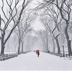 Snowy day in Central Park – New York Picture by Happy Saturday… – All Pictures New York City Photos, New York Pictures, Napoleon Hill, Central Park New York, Transformers, Snowy Pictures, Destinations, Winter Road, Snowy Day
