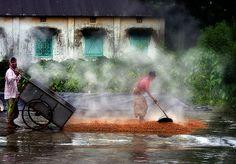 Drying #Rice #Bangladesh #Cluster #Expo2015