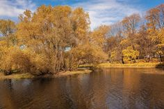 Autumn Gold Leaves Photograph - Autumn Park Yellow Gold Foliage 2 by Anna…