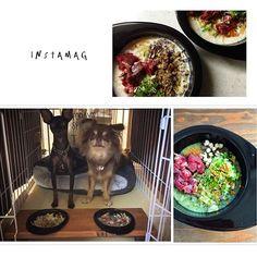 * * 犬飯(*´˘`*)♬ * たまにはハウスで食べようか(*´ㅂ`*) * #犬ごはん#犬飯#手作り犬ごはん#ワンコご飯#お犬様ご飯#わんこご飯#dogmeal#犬#犬のいる暮らし#犬のいる生活#愛犬 #多頭飼い#チワワとミニピン #チワワ#デカチワワ #ミニピン#ミニチュアピンシャー#ピンシャー ・・・・・・・・・・・・・・・・・・・・