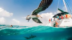 This photo was taken at Shark Ray Ally in Belize. We were snorkeling with nurse sharks and sting rays, and this bird wanted to get some love too!