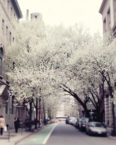 A street in Manhattan. with urban culture and the beauty of nature hanging over them