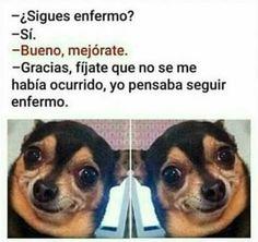 New memes funny espanol ecards Ideas Mexican Funny Memes, Funny Spanish Memes, Spanish Humor, Really Funny Memes, Stupid Funny Memes, Pinterest Memes, New Memes, Animal Memes, Funny Animals
