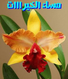 When we approached the Flores & Prats company, we needed to target on their specific Unusual Flowers, Wonderful Flowers, Rare Flowers, Beautiful Flowers, Orchid Flowers, Orquideas Cymbidium, Orchid Varieties, Cattleya Orchid, Exotic Plants