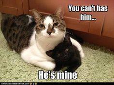 Go get your own kitten. - Cheezburger