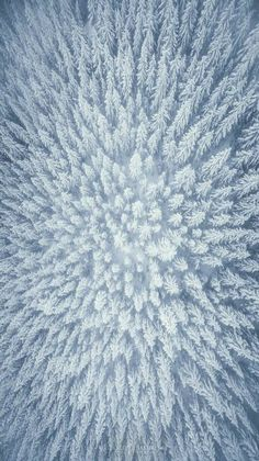 Winter Wonderland - Stunning aerial view of snowy pine trees at Mount Hood, Oregon. - Michael Shainblum Photography