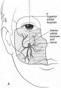 Nerve Chart For Shingles Adult Dermatome Inspirations