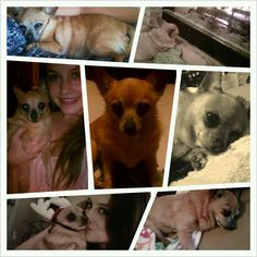 Rest In Peace Little Sassy 11-29-12