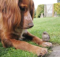 puppy and bird are friends