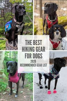 Dog Hiking Gear, Camping And Hiking, Backpacking With Dogs, Hiking With Dog, Best Hiking Backpacks, Dog Backpack, Dog Boots, Dog Safety, Dog Items