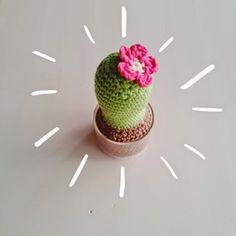 Sugar, spice & everything nice Flower Bookey, Flower Film, Flower Names, Flower Pots, Crochet Cactus, Diy Crochet, Crochet Flowers, Cactus Craft, Flower Meanings