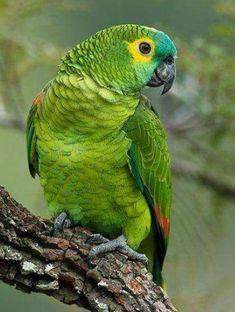 Safari AMAZON GREEN PARROT solid plastic toy wild zoo animal Jungle BIRD NEW