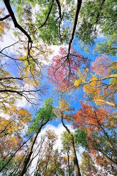 N a t u r e - colored Leaves of trees -