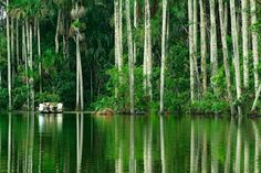 Tambopata amazon jungle   Peru