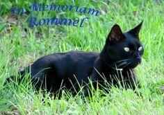 In Memoriam Missy and Rommel