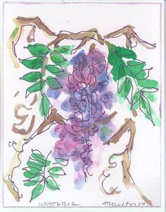 Wisteria watercolor - doing a lot of drawings of wisteria lately