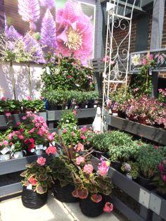 Next   Home U0026 Garden   Home   Decorating Centre   Garden   Lifestyle    Layout