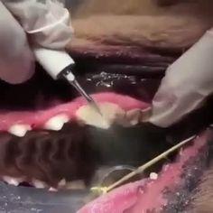 Rabbit Anatomy, Dog Anatomy, Veterinarian Career, Dental Hygiene Student, Dental Videos, Pet Hotel, Medicine Student, Emergency Preparation, Teeth Care