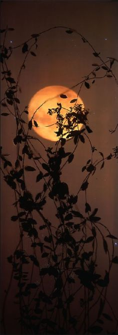 Moon and leaves photo!!!