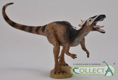 Xiongguanlong a tyrannosauroid dinosaur. Model made by Collecta and soon to be available from Everything Dinosaur (2015).