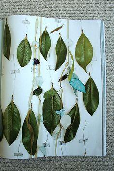 rachel t robertson, herbarium