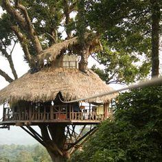 Ziplining through the rainforest in the Bokeo Reserve, Laos... from a TREEHOUSE!! Truly awesome.