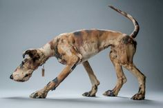 Elaine Peto's Ceramic Sculpture of a #Dog walking.