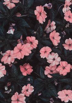 art wallpaper Marvelous Flower Wallpaper for Sytle Your New iPhone