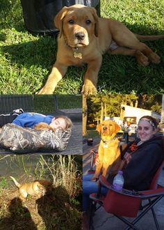 Rusty |  Fox Red Labrador | Puppy | Past Litter Teaka & Duke | Balsam Branch Kennel | Wisconsin | rusty-fox-red-lab-td