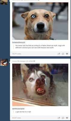 The dog on the bottom is killing me...lol