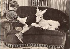 A boy with a donkey on a sofa. (original source unknown to me)