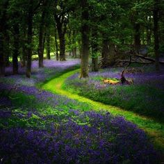 Bluebell Path, Perthshire, Scotland
