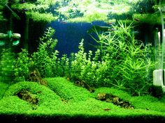 bottom grass plant for small tank?