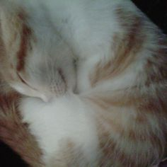 All curled up cozy....