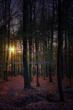 Autumn woods, Belgium