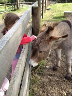 Collingwood Children's Farm - a real working farm on the outskirts of the CBD and full of charm. City Farm, Down On The Farm, School Holidays, Farm Life, Children, Kids, Things To Do, Birthday Parties, Donkeys