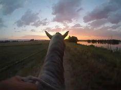 Cute Horses, Horse Love, Beautiful Photos Of Nature, Beautiful Horses, Aesthetic Photography Nature, Nature Photography, Horse Wallpaper, Horse Videos, Photocollage
