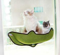 Cat Window Hammock, Cat Window Perch, Cat Perch, Cat Hammock, Window Sill, Cool Cat Beds, Cat Body, Dog Beds For Small Dogs, Buy A Cat