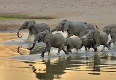🐘🐘Weshalb wir Elefanten lieben - wissenswerte Fun Facts | Urlaub in Afrika | Safari | Tierbeobachtung | Game Viewing | Rhino Africa, Fun Facts, Safari, Elephant, Animals, Snorkeling, Elephants, Interesting Facts, Travel Advice