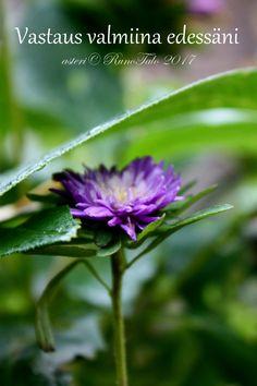 Affirmation Cards, Affirmations, Study, Nature, Flowers, Plants, Photographs, Naturaleza, Photos