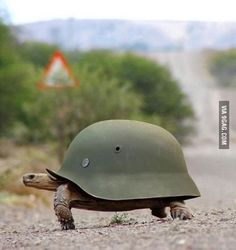 Ready for war!