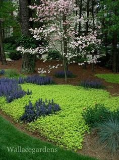 groundcover: creeping jenny, love, love, love creeping jenny - spreads fast, disease resistant, low maintenance, chokes out weeds, and the amazing color contrast with other plants is amazing!