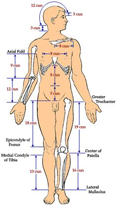 Cun measurements of the body